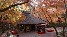 Park Nara w grudniu 2007 roku (663highland/Wikipedia (CC BY-SA 3.0))
