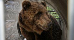 Lagorai - to tutaj złapano niedźwiedzia
