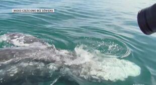 Wieloryb błąka się po Morzu Śródziemnym