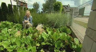 Ogród z kwietną łąką i labirynt z kukurydzy (odc. 554)